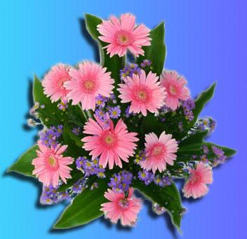 Альфа лаваль вакансии спб цветы Уплотнения теплообменника Funke FP 50 Братск