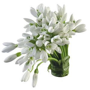 Вологда цветы подснежники купить цветы на заказ с доставкой таллинн
