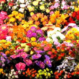 Биробиджан доставка цветов курьером гродно, где купить цветы зимой купальник