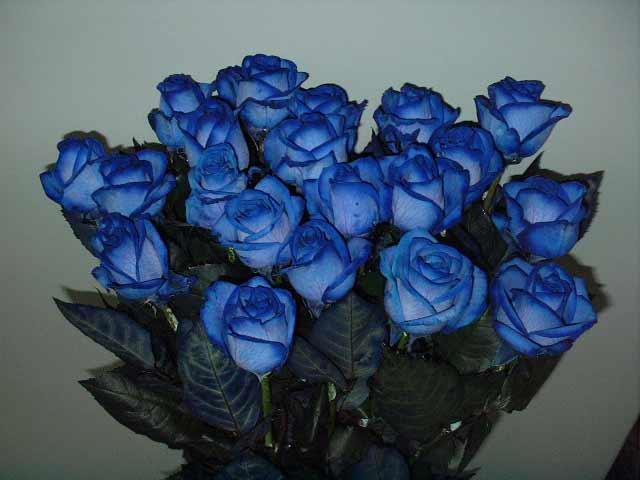 Синие розы купить заказать выбрать